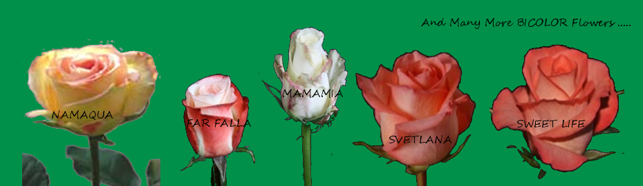 bicolor_flowers